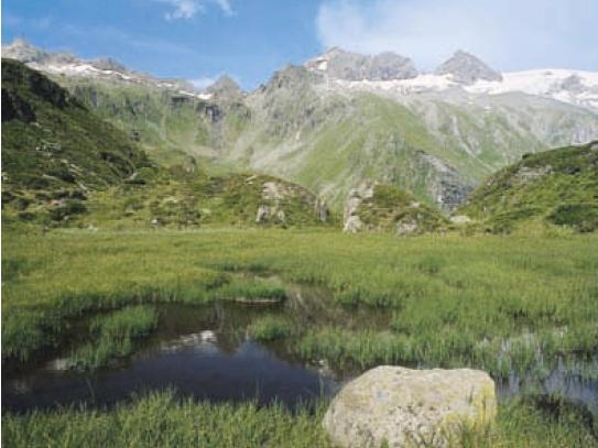 Unweit der Berliner Hütte befinden sich diese malerischen Sumpfwiesen