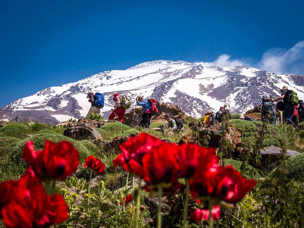 Was für Alpen-Fans das Matterhorn mit Enzian, ist für Iraner der Damavand mit Mohn im Vordergrund.