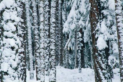 Winterwanderung durch den tief verschneiten Piburger Wald