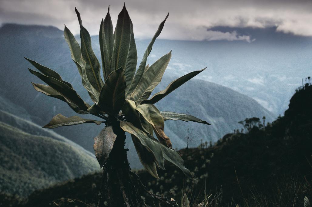 Trekking in den Anden Kolumbiens
