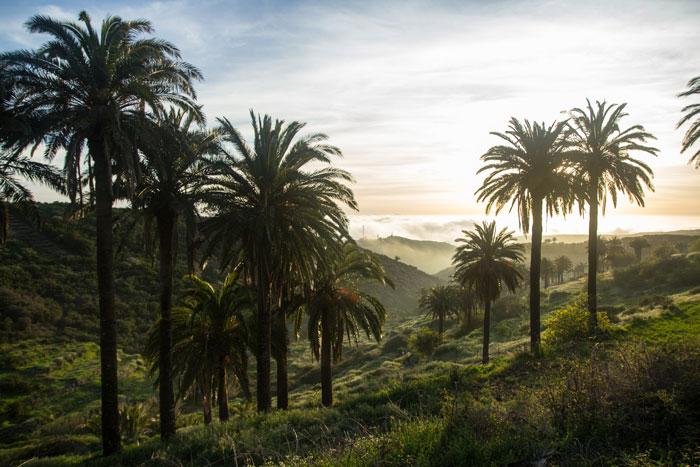 Das Bergdorf Las Hayas liegt von einem Palmenhain gesäumt am Rande des Nationalparks Garajonay.