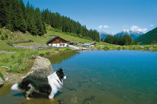 Die Inzinger Alm in den nördlichen Stubaiern: ein gemütliches Almhaus, ein kleiner See, der Hirtenhund und ganz viel Almflair…