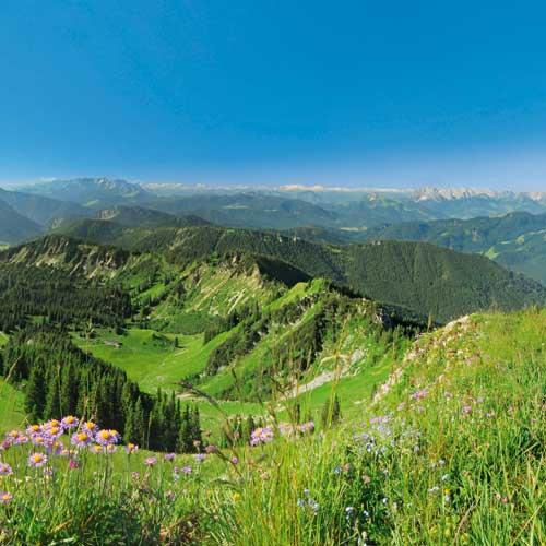Es ist Frühling am Hochgern! Der Blick vom Gipfelgrat nach Süden mit Wilder Kaiser (rechts), dahinter Hohe Tauern, in Bildmitte die Loferer Steinberge und links die Berchtesgadener AlpenFotos: Andreas Strauß