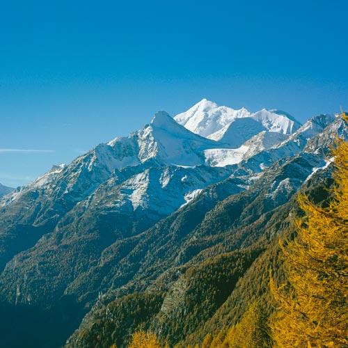 Zwischen feurigem Laub und weißem Schnee: Die Lärchen am Augstbordhorn setzen farbige Kontraste zum Weisshorn.