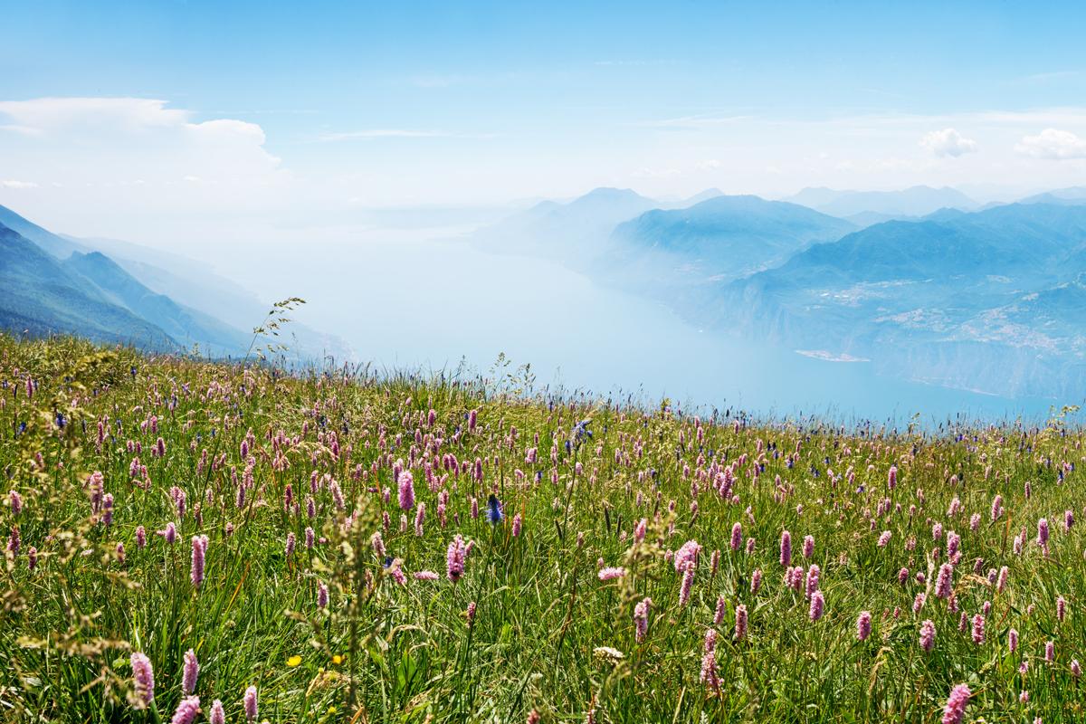 Monte Baldo Blumen
