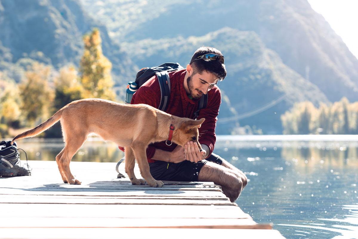 Hund Bergsee