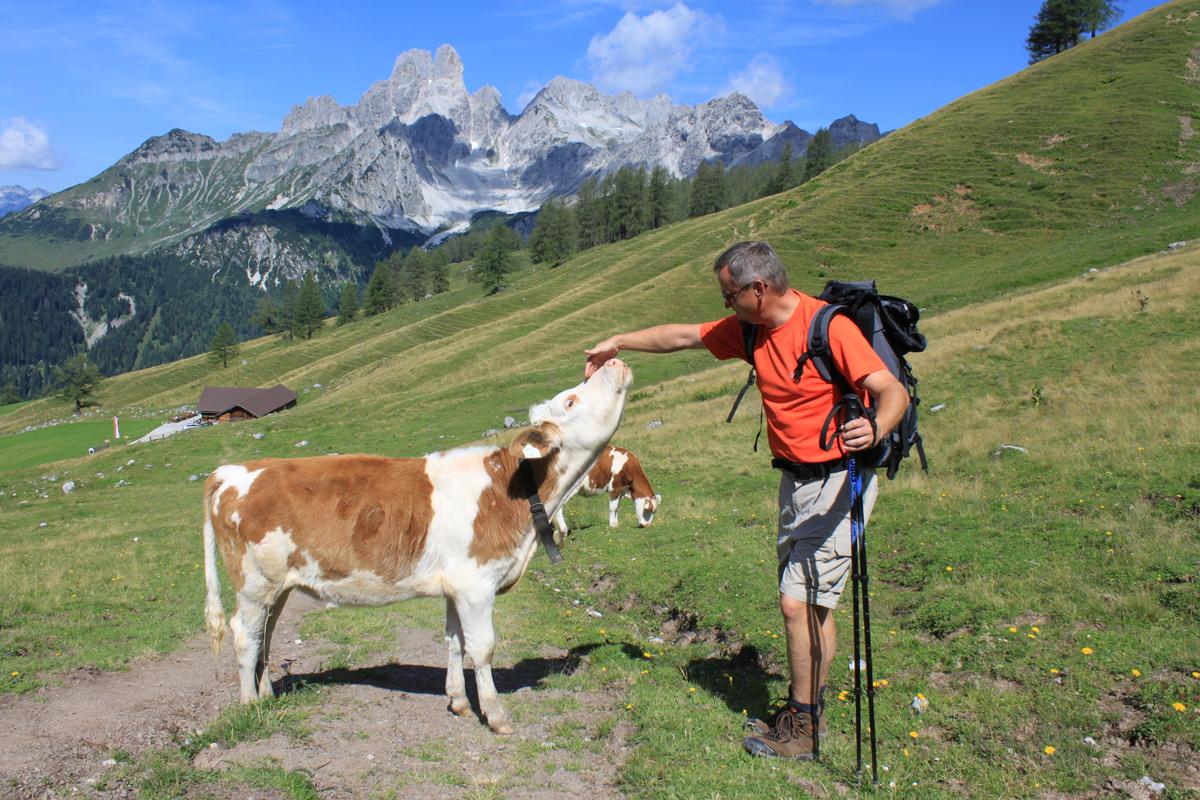 Wanderer streichelt Kuh