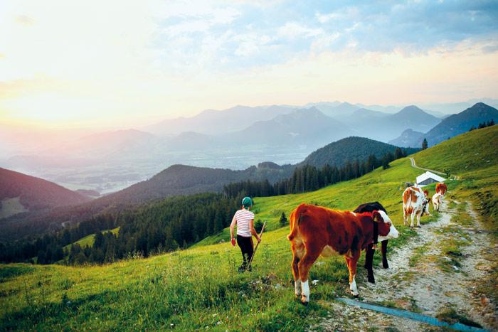 Morgens und abends treibt Martina Fischer die Kühe von den Weiden zum Melken in die Rampoldalm.