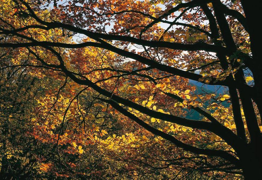 Spätherbst in den Wäldern der Gardaseeberge – ein Farbenrausch!